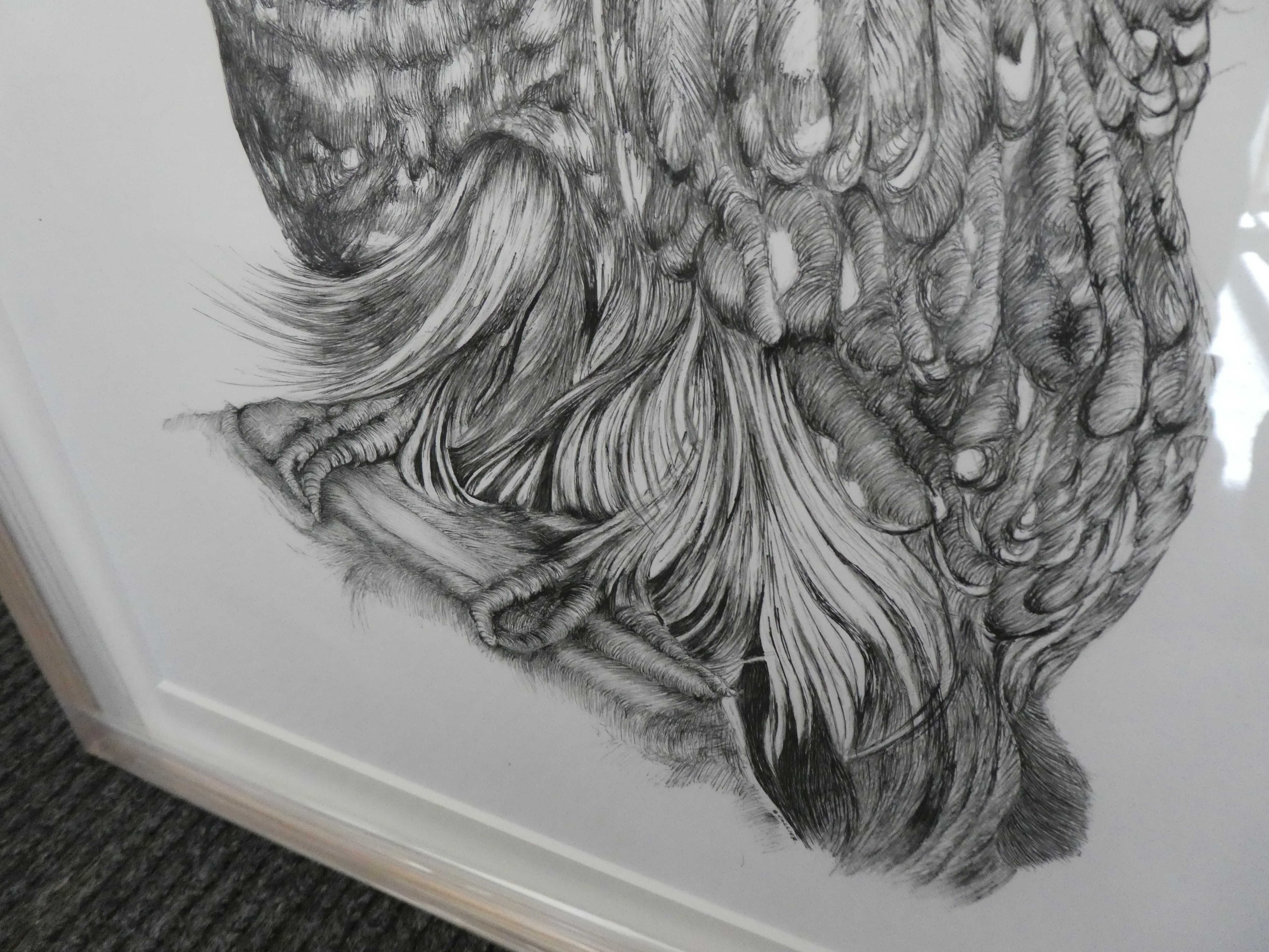 Betty_Collier_Barred_Owl_Close_Up_Tail_LowRes