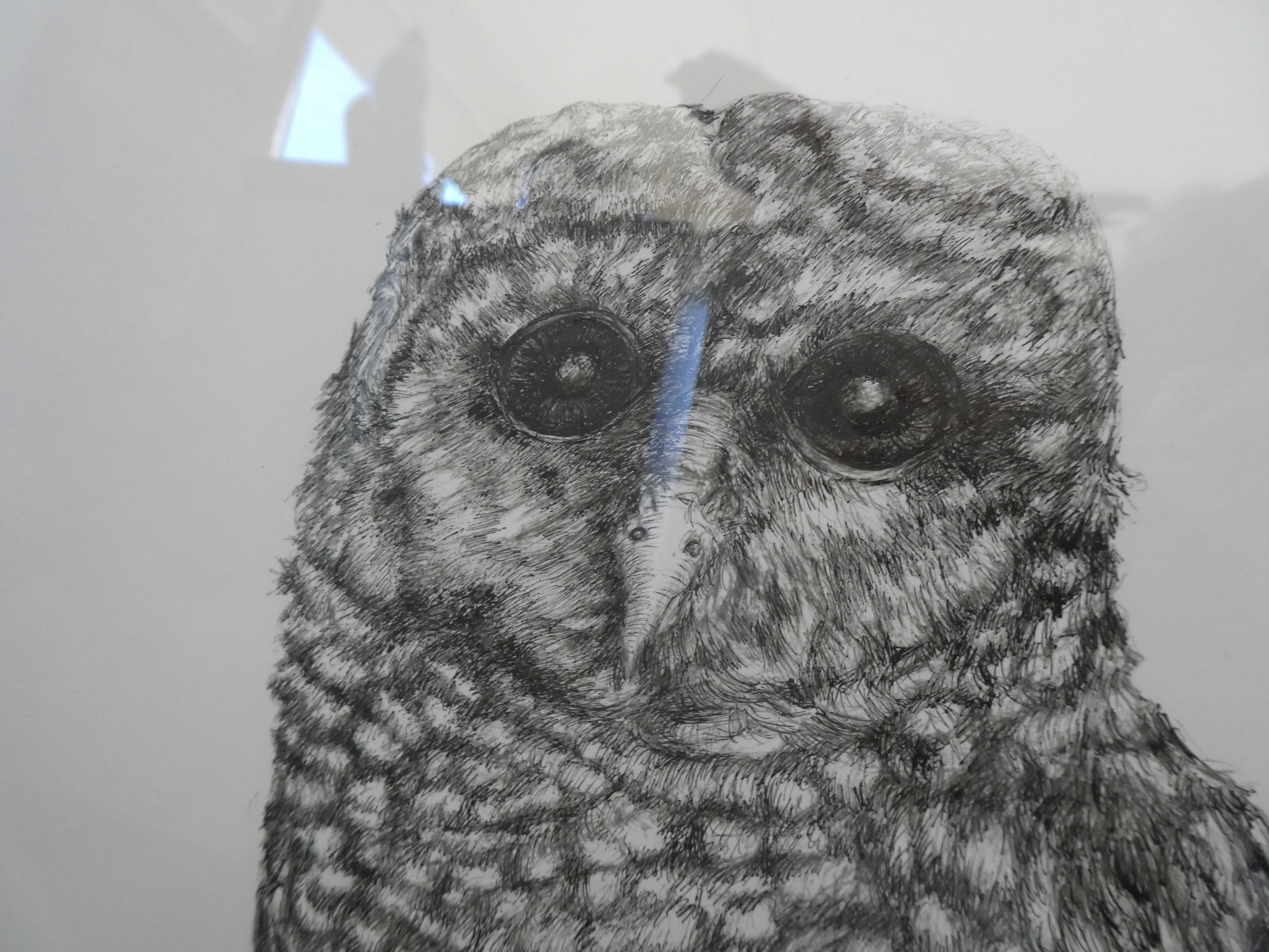 Betty_Collier_Barred_Owl_Close_Up_Head_lowRes