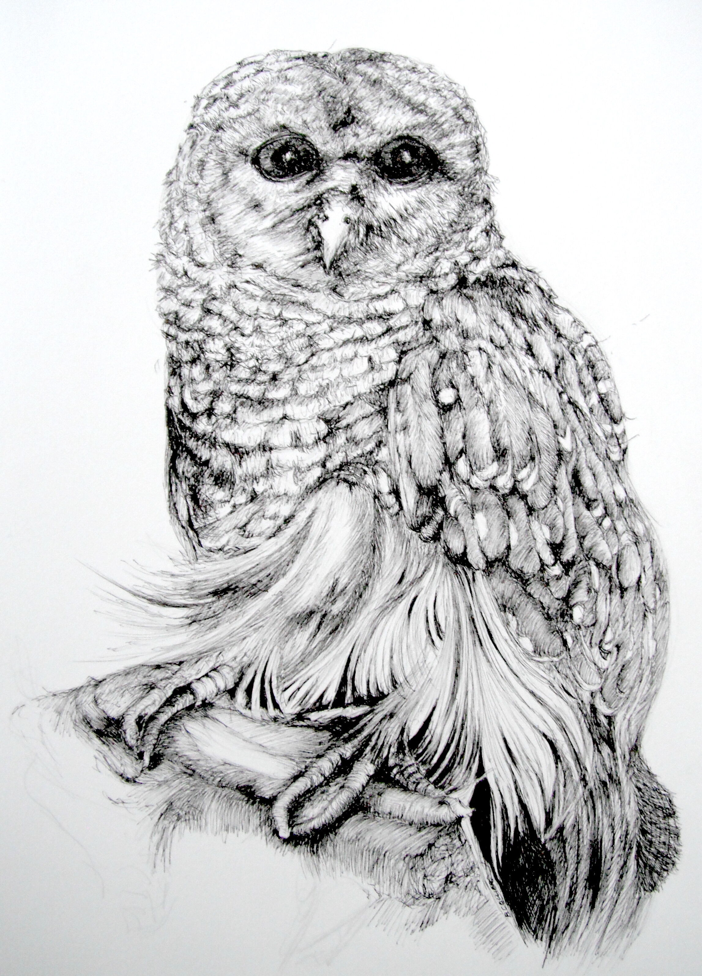 Betty_Collier_Barred_Owl_Before_Framing%202