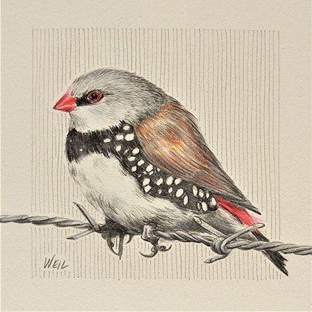 450-Weil-Finch
