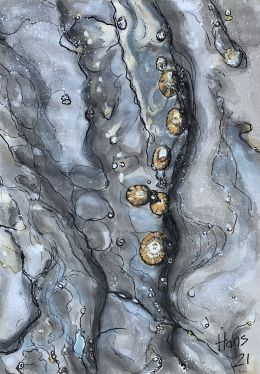 29_Hans Van Weerd_Limpets and Barnacles waiting for the Tide_Ink, watercolour and gouache