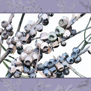 Tea Tree seedpods final01 A4