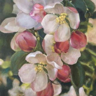 IMG_3830, Apple Blossom time,